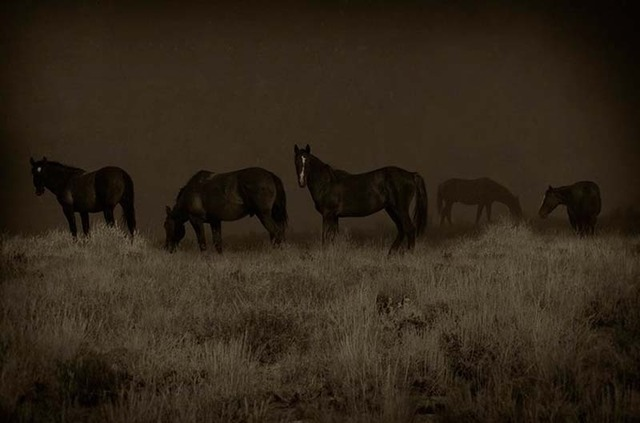 Jack Spencer, 'Wild Horses, Greenriver, Wyoming,' 2007, Contessa Gallery
