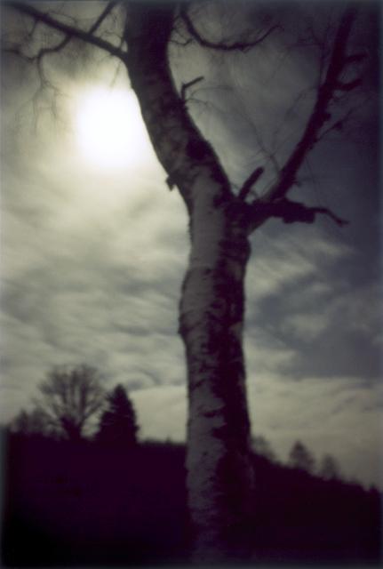 , 'Forest #1, Untitled (Moon Shine),' 2000, Yancey Richardson Gallery