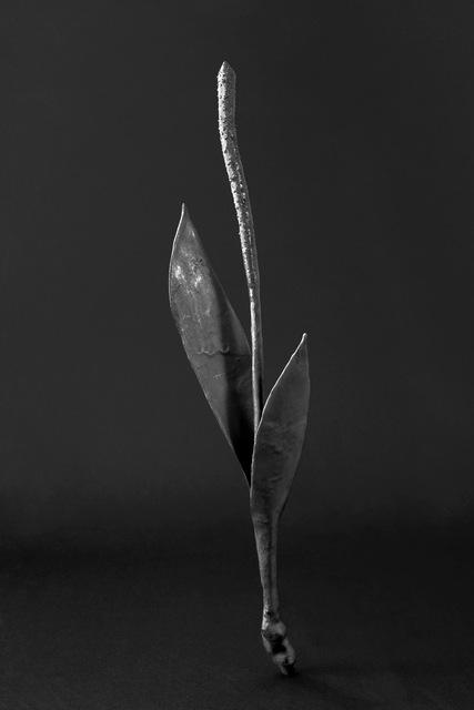 Maria Jose de la Macorra, 'Bronce Herbarium', 2014-2018, GALERÍA ETHRA