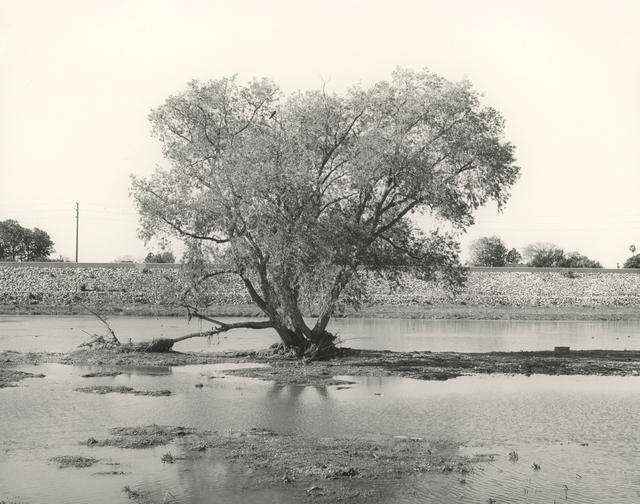 , 'LA River Estuary #9,' 2017, Gallery Luisotti