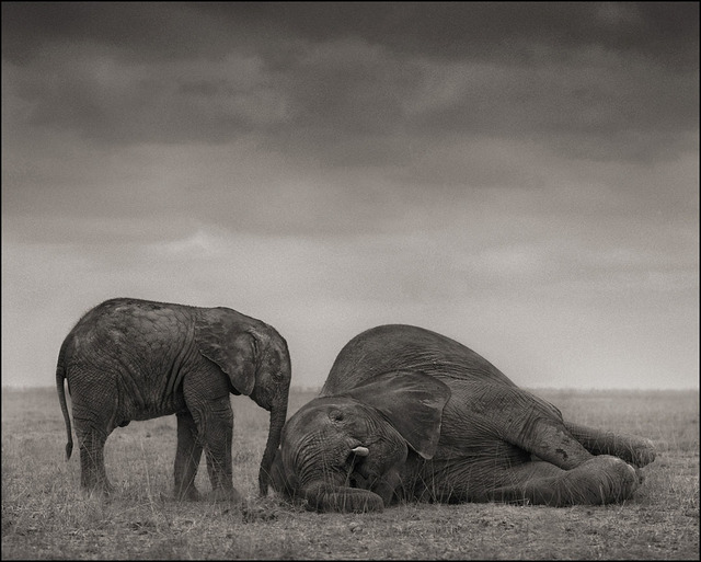 , 'Elephants (The Two), Amboseli,' 2012, Edwynn Houk Gallery