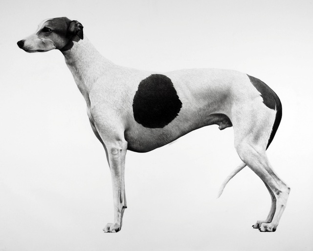 , 'Greyhound,' 2016, Purdy Hicks Gallery