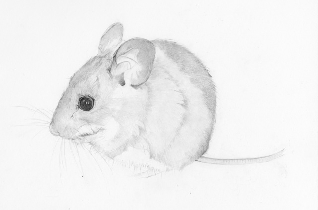 Heather Lancaster, 'Field Mouse', 2015, Spalding Nix Fine Art