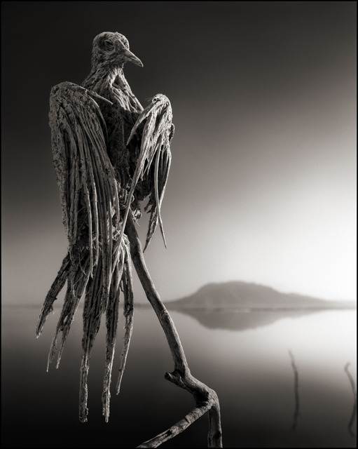 Nick Brandt, 'Calcified Caped Dove, Lake Natron 2010', 2010, photo-eye Gallery
