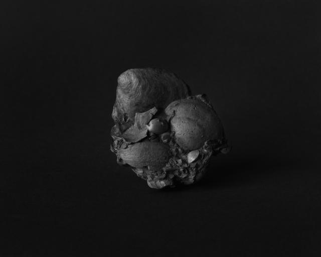 , 'Fossils,' 2016, MATÈRIA