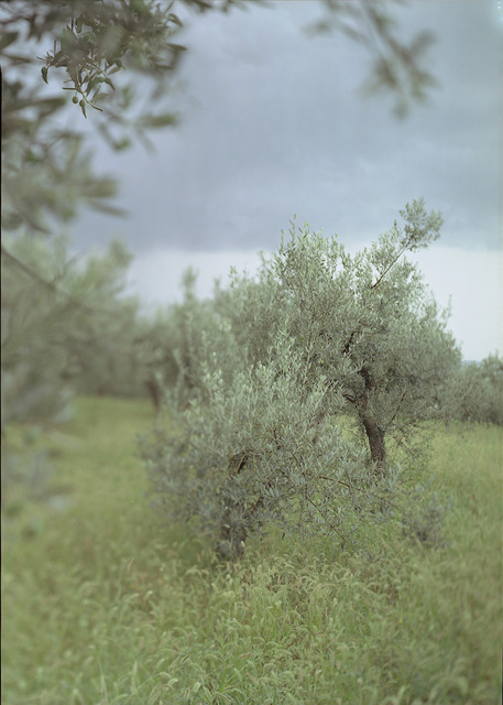 Joann Verburg, 'Little Green Tree (with Olives)', 2003, G. Gibson Gallery