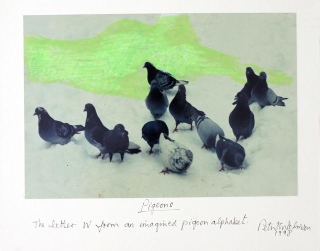 , 'Pigeons,' 1998, Gaa Gallery