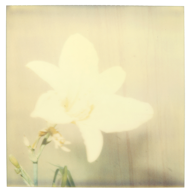 Stefanie Schneider, 'Flower (29 Palms, CA)', 1999, Photography, Digital C-Print based on a Polaroid, not mounted, Instantdreams
