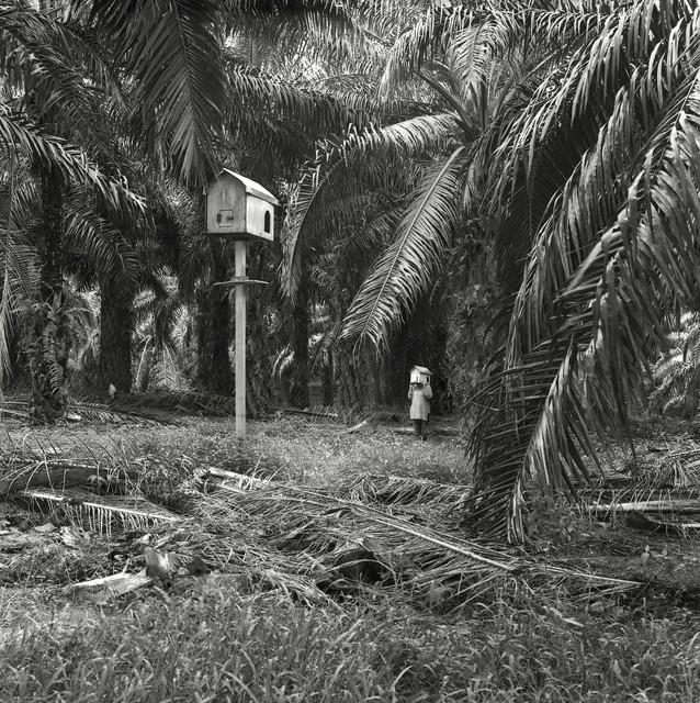 , 'Vegetation,' 2016, Jhaveri Contemporary