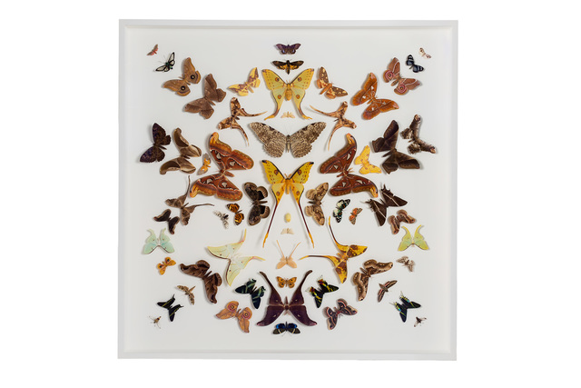 ", 'Nº 10 ""Moth Collection"",' 2015, Chamber"