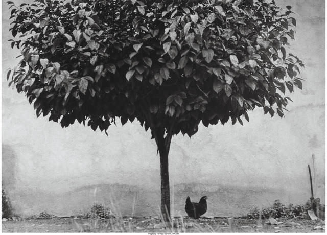 Edouard Boubat, 'L'Arbre et la Poule', 1950, Heritage Auctions