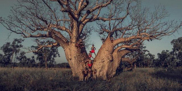 , 'XLI 19, Nulgit Family, Mowanjum, Boab tree, Derby, The Kimberley, Australia,' 2018, Atlas Gallery