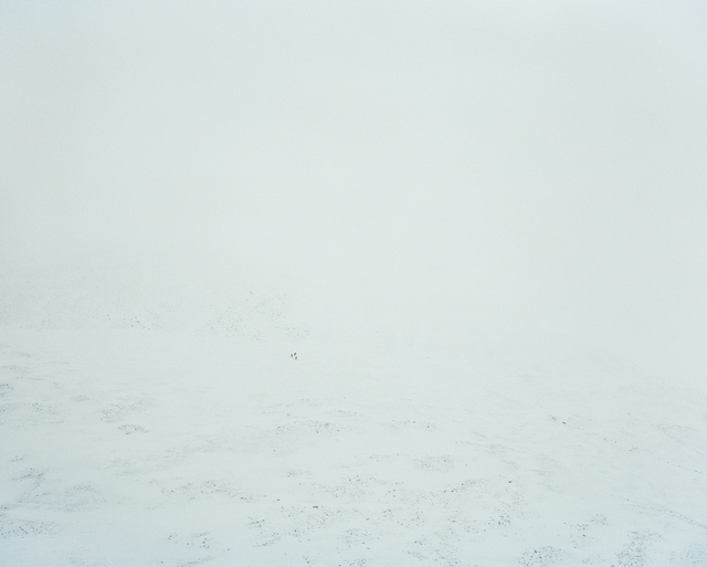 , 'Barrens Caribou, Yukon,' 2014, Circuit Gallery