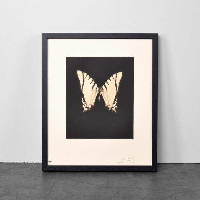 Damien Hirst, 'Damien Hirst, Spirit', 2011, Oliver Cole Gallery