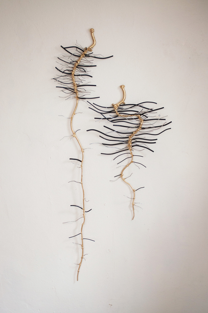 , 'Lettuce Roots at Three Weeks Old,' 2015, Galleria Ca' d'Oro