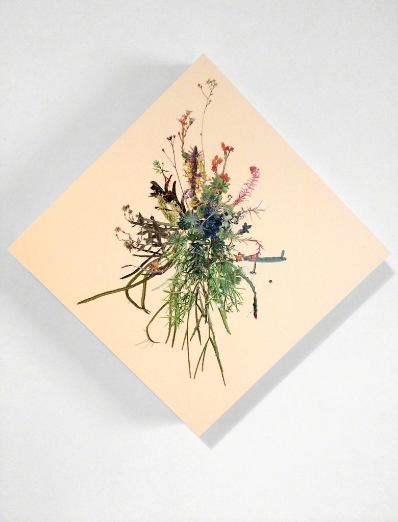 Stephen Eichhorn, 'Window V (Cacti & Succulents),' 2014, CES Gallery