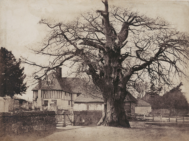 , 'The Oak Tree in Winter, Hawkhurst, Kent, UK,' ca. 1852, Contemporary Works/Vintage Works