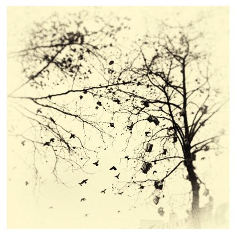, 'BK0191,' 2013, Ira Stehmann Fine Art Photography