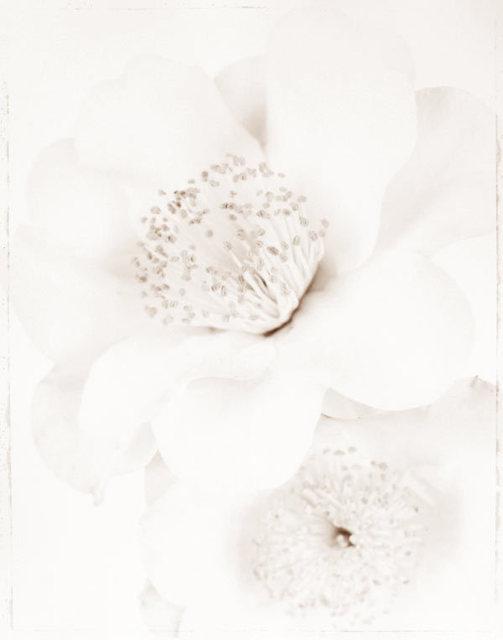 Ron van Dongen, 'Camellia j. 'Silver Waves' (WOW 077)', 2008, Benrubi Gallery