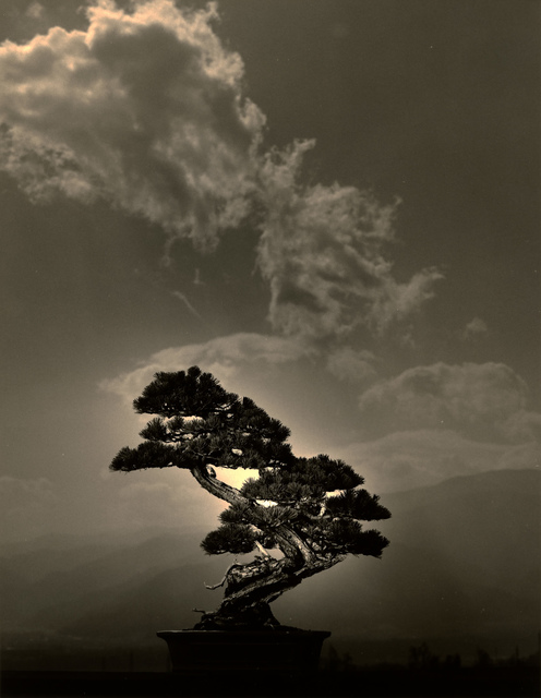 Yamamoto Masao, 'Bonsai #4007', 2018, Robert Koch Gallery