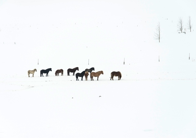 , 'Snow Drawing (no 5135) 9 Horses,' , Fabrik Projects Gallery