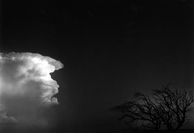 , 'Cloud and Tree, San Sebastian, Santa Fe, NM,' 1982, Obscura Gallery
