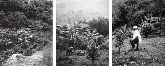 , 'ESTENOPEICAS RURALES - FAMILY BARRETO BONILLA - SAN LUIS DE OCOA,' , Dohyang Lee