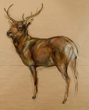 , 'Untitled (Stag) ,' 2009, Tayloe Piggott Gallery