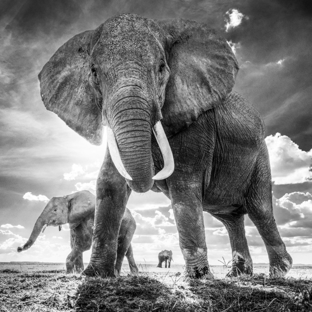 , 'The Untouchables, Amboseli, Kenya ,' 2017, Holden Luntz Gallery