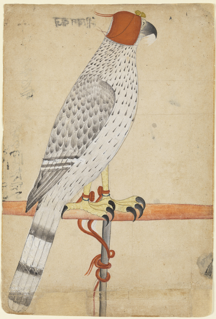 , 'Ferocius Falcon,' late 18th century, Princeton University Art Museum