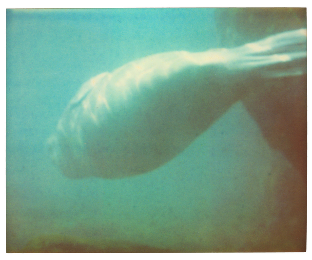 Stefanie Schneider, 'Dugong IV - Stay, Contemporary, Polaroid, Color, Coney Island, Animal, Blue', 2006, Instantdreams