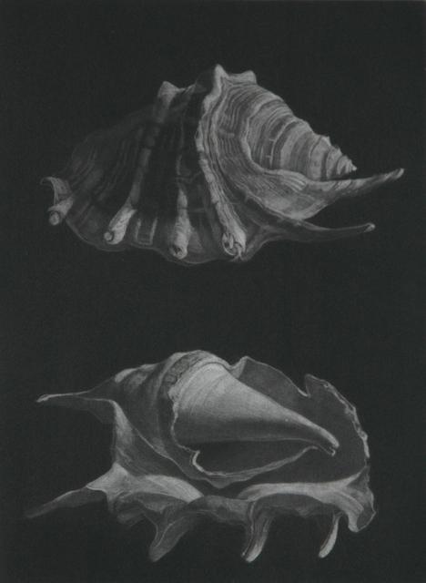 Judith Rothchild, 'Araignée', Childs Gallery
