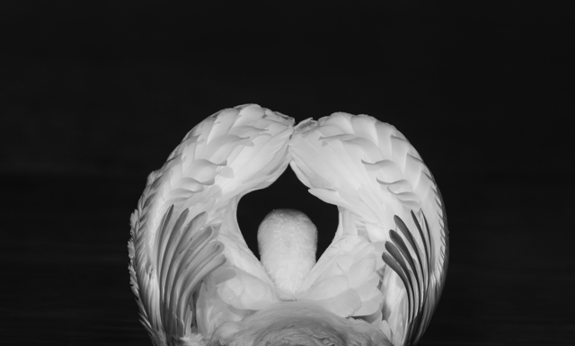 , 'Feather sculpture,' 2010, The Art of Wild Gallery