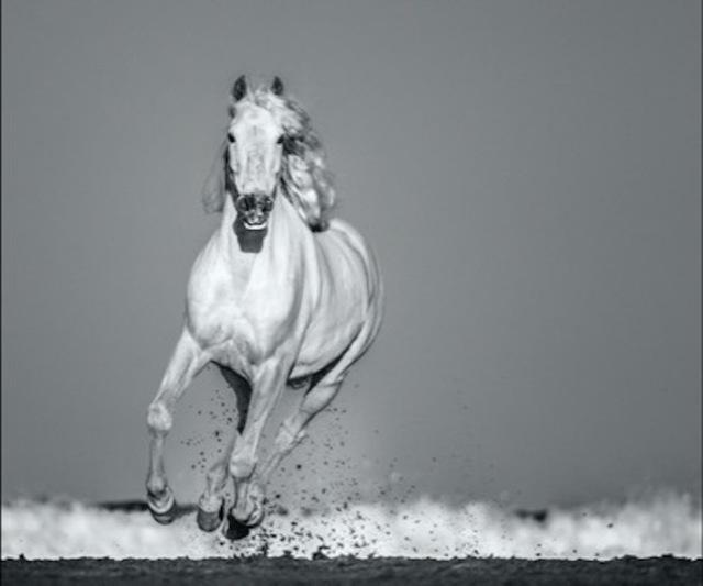 David Yarrow, 'Pegasus', 2020, Photography, Archival Pigment Print, Maddox Gallery