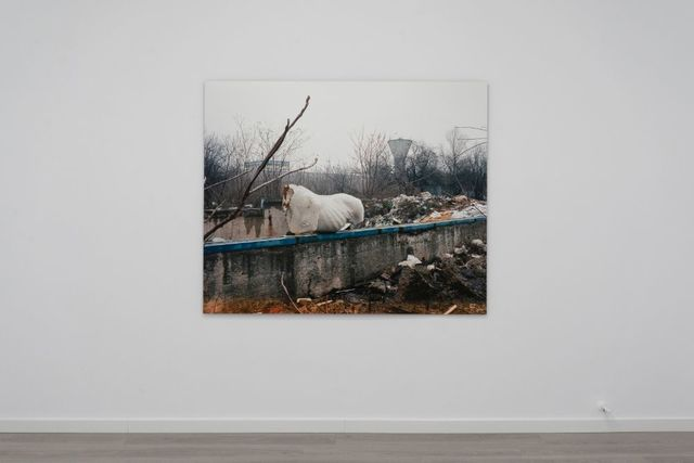 Michele Bressan, 'Timpuri Noi', 2014, Photography, Ultrachrome pigment print on Hahnemuhle Rag Baryta paper mounted on aluminium, Art Encounters Foundation