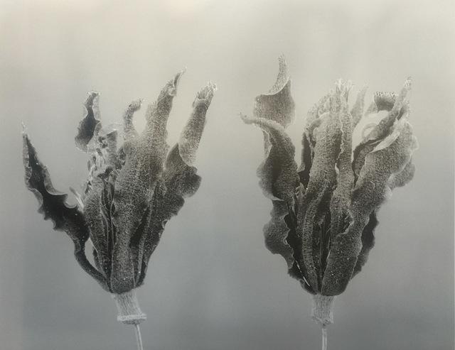 , 'Gardenia-Auspiciousness,' 2011-2017, Alisan Fine Arts