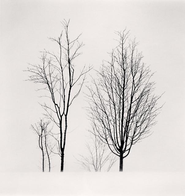 , 'Bare Branches, Biei, Hokkaido, Japan,' 2012, G. Gibson Gallery