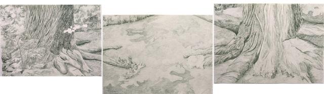 Gabriela Albergaria, 'Distance between a Liriodendron Tulipifera (USA) and a Sugar Maple (Canada) at Brooklyn Botanic Garden', 2017, Sapar Contemporary