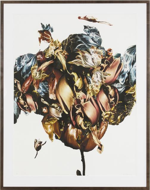 , 'Metamorphosis Naturalis - Tulip III,' 2018, BBA Gallery