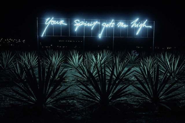 Olivia Steele, 'Your Spirit Gets Me High ', 2017, Photography, Lightjet sobre papel fotográfico Kodak metálico, montado sobre PVC Negro y Acrílico, MAIA Contemporary