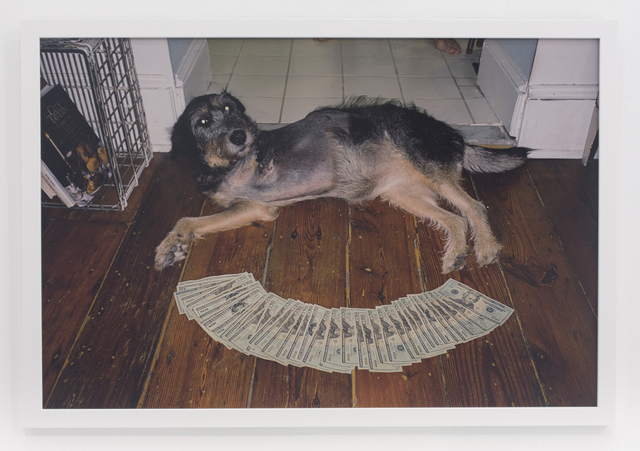 , '3 legged dog on floor,' 2010, The Hole