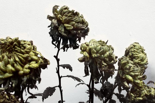 , 'In Furious Bloom II ,' 2016, Ink Studio
