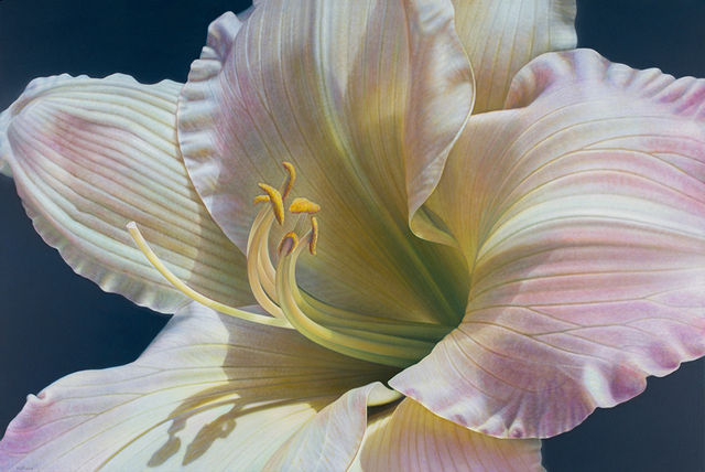 , 'Daylily Series #1 ,' , Rosenthal Fine Art