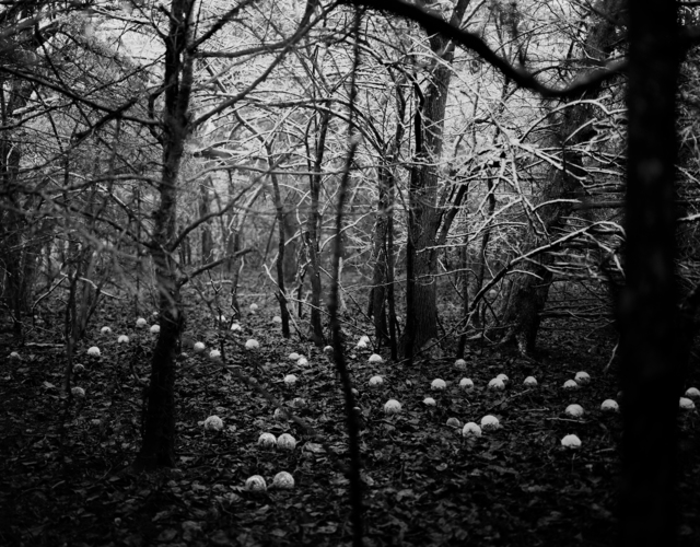 Daniel Coburn, 'Scattering Seeds', 2014, Elizabeth Houston Gallery