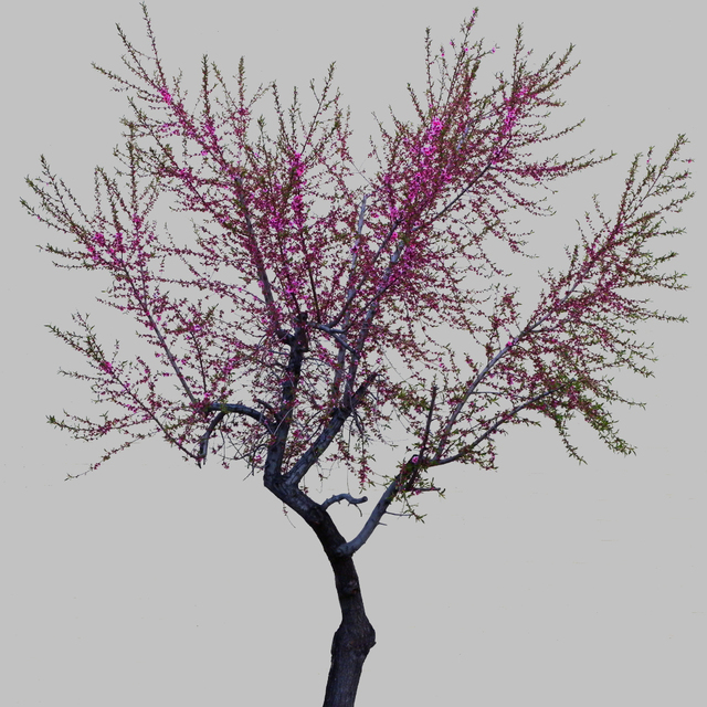 , 'TDTDC 39 (Purple Tree),' 2011, photo-eye Gallery