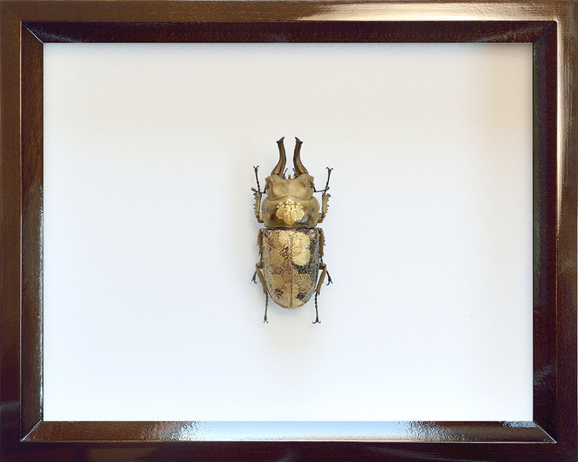 , 'K0117 Toyotomi,' 2017, Aki Gallery