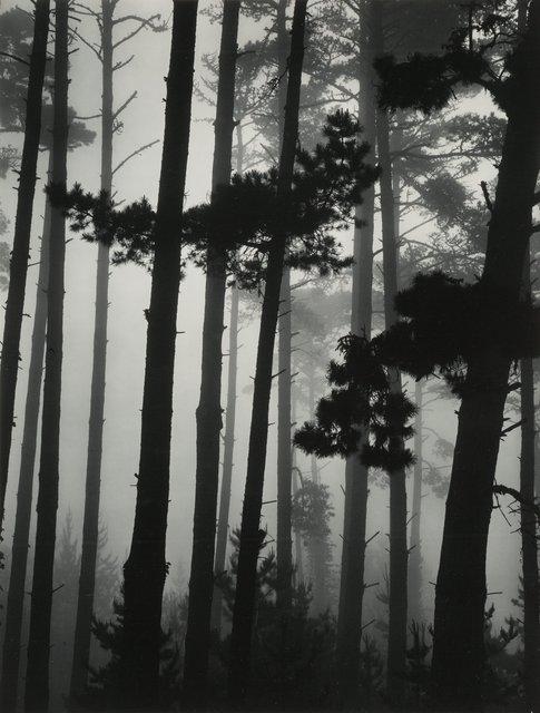 Brett Weston, 'Pines in Fog', 1962, Heritage Auctions