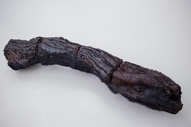 , 'Barking up The Wrong Tree,' 2016, ARTLabAfrica