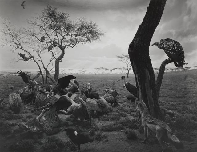 , 'Hyena-Jackal-Vulture,' 1976, Foam Fotografiemuseum Amsterdam