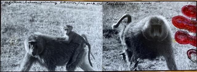 , 'Baboon Diptych , Nbi Park, 1968,' 1968, Michael Hoppen Gallery